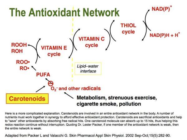 Antioxidant-Network-1024x768