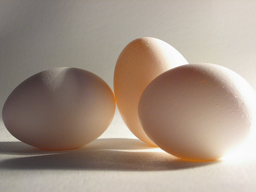 Eggs-3694187993_5063436629