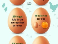 Egg Cellent Facts