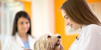 how much is pet insurance